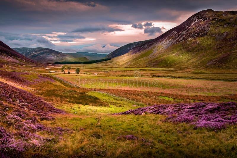 与紫色高地石南花、草和树的美好的Braemar山日落 库存照片