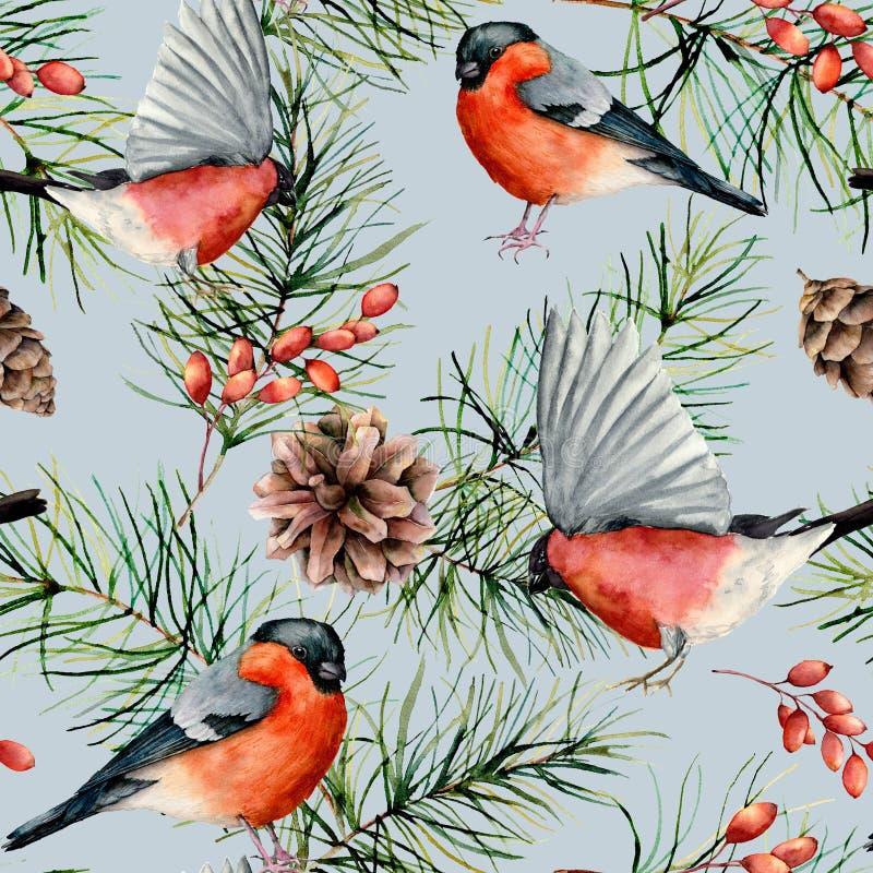 与红腹灰雀的水彩冬天无缝的样式 手画鸟,与锥体,被隔绝的莓果的杉木分支  库存例证