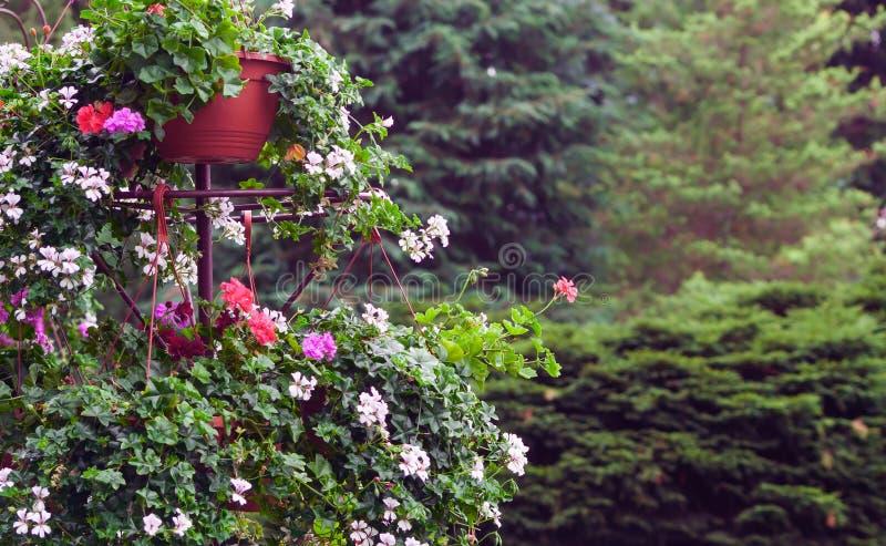 与红色、白色和树荫的美丽的花床 图库摄影