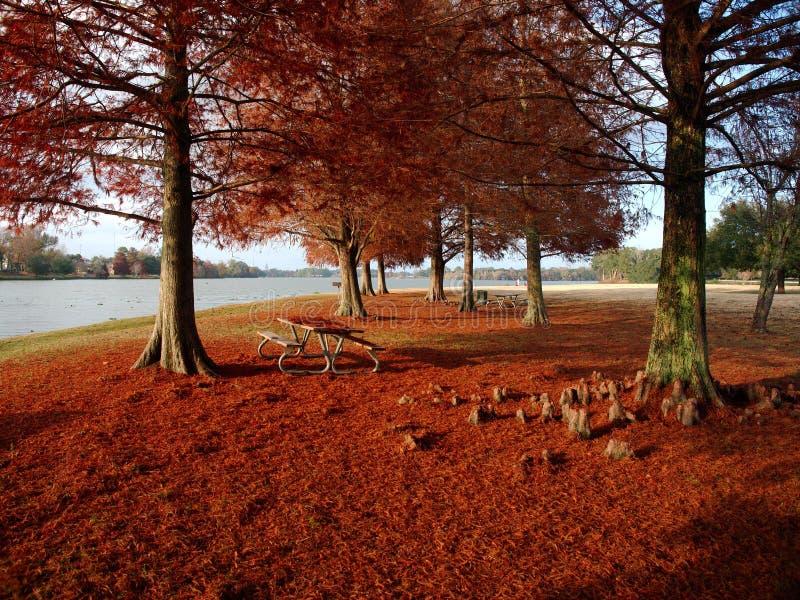 与红色叶子的柏树在University湖 免版税图库摄影