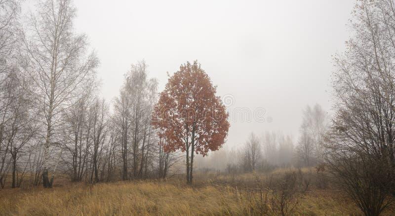 与红色叶子的秋天树在雾 库存照片