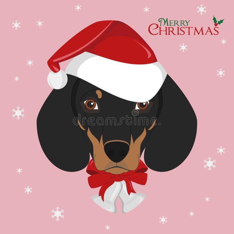与红色圣诞老人` s帽子和圣诞节铃声的达克斯猎犬狗 皇族释放例证
