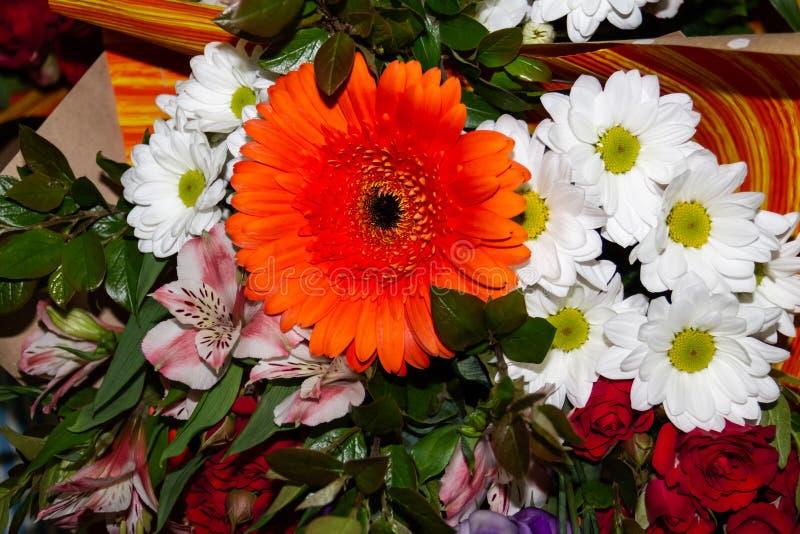 与红色大丁草和白色菊花的花束 免版税库存照片