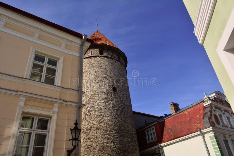 与红色屋顶的老塔在塔林,爱沙尼亚 图库摄影