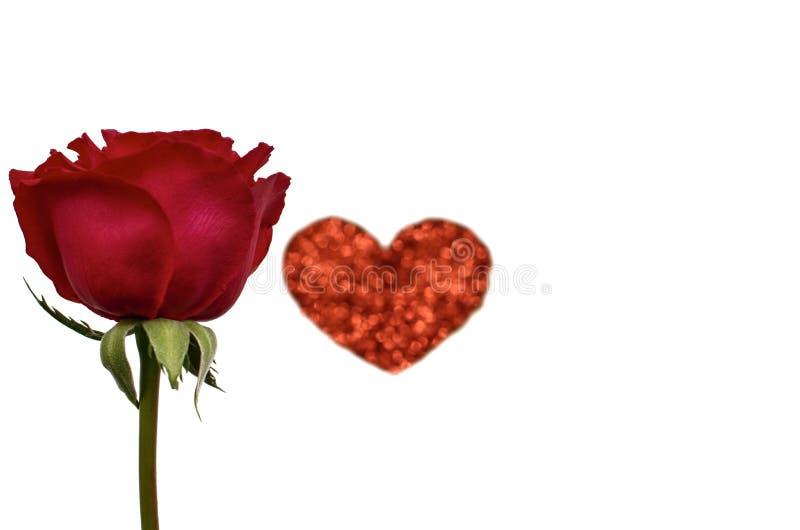 与红色心脏爱形状的一朵唯一红色玫瑰 库存照片