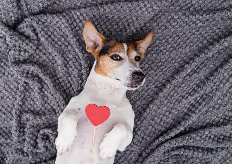 与红色心脏的逗人喜爱的幼小狗宠物 库存图片