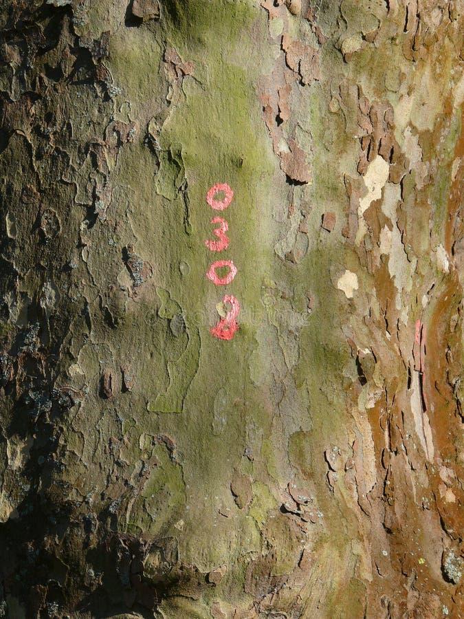 与红色数字的树干 免版税图库摄影
