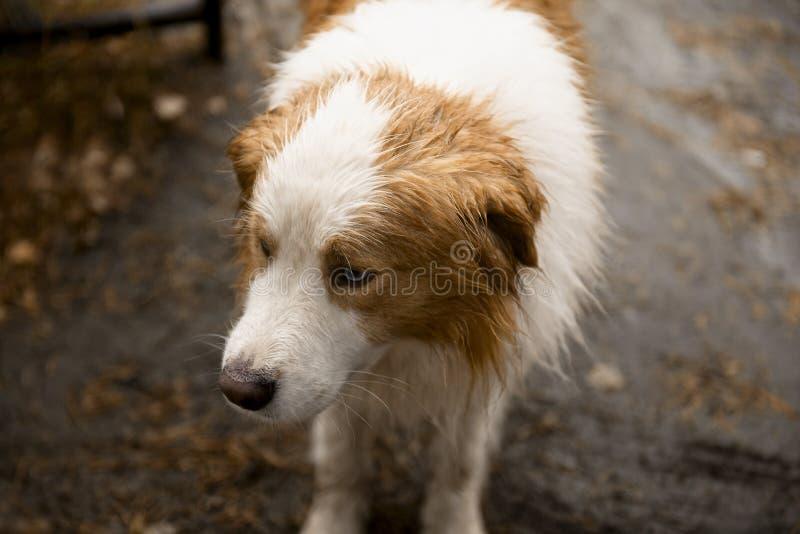 与红色斑点特写镜头的狗 免版税库存照片
