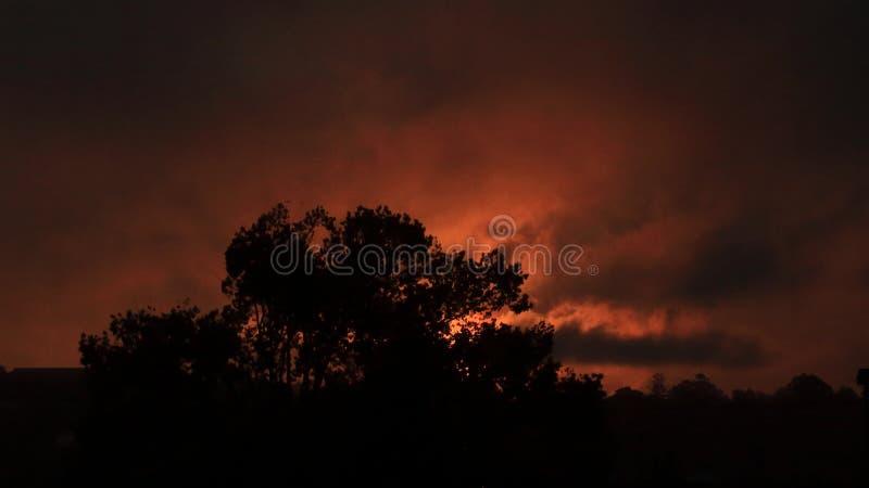 与红色日落的树剪影 库存图片