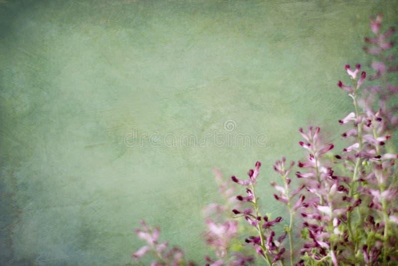 与红色杂草的背景 免版税库存图片