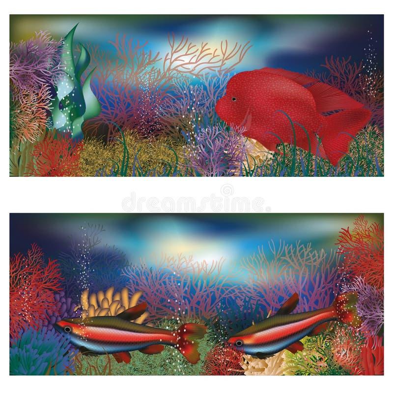 与红色热带鱼的水下的横幅 向量例证