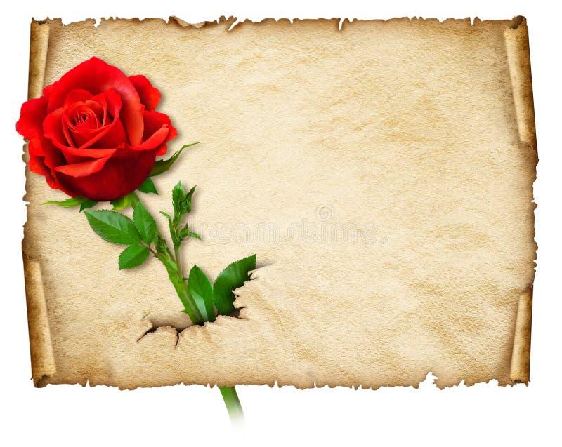 与红色玫瑰的老卷曲纸 向量例证