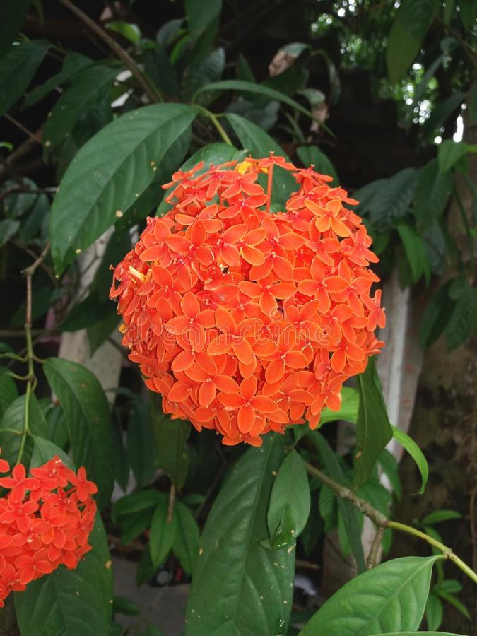 与红色瓣的美丽的花 免版税库存照片