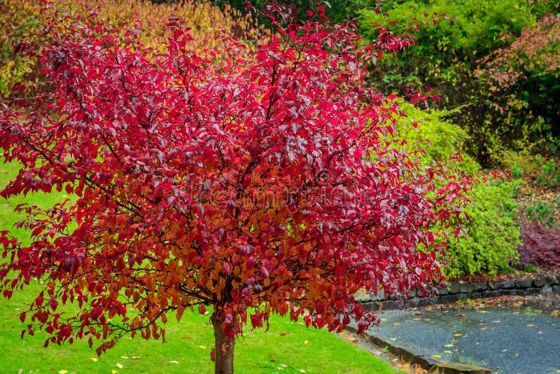 与红色秋叶的树 库存图片