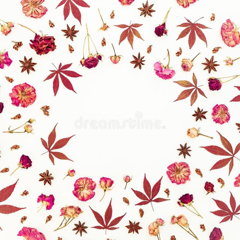 与红色秋天叶子和干玫瑰的秋天框架在白色背景开花 平的位置,顶视图 免版税库存图片