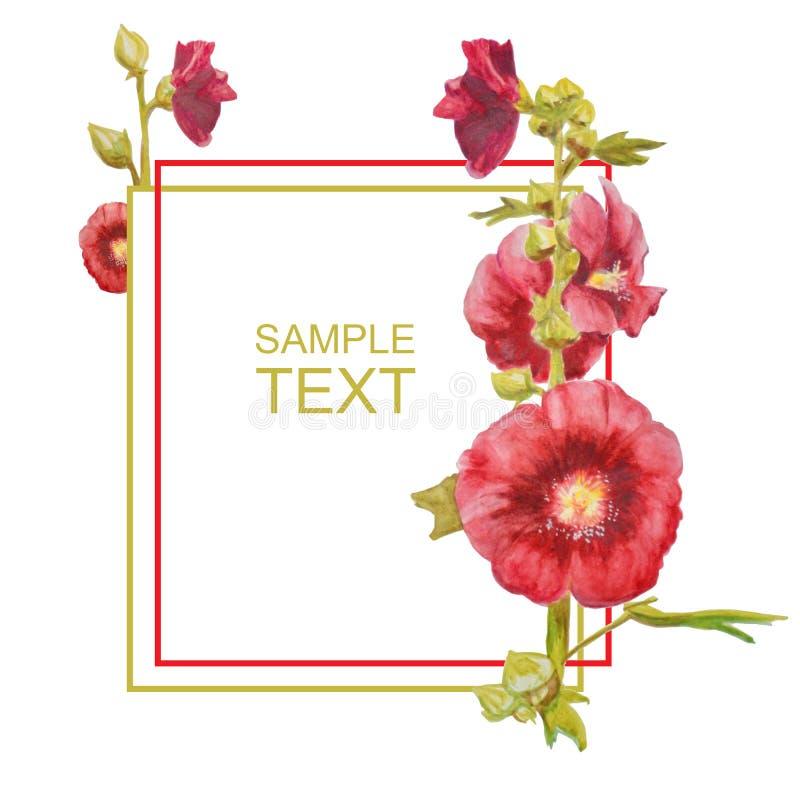 与红色花的美丽的水彩卡片 在白色背景隔绝的冬葵植物 皇族释放例证