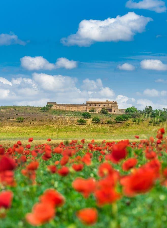 与红色鸦片领域的美好的地中海自然风景 免版税库存图片