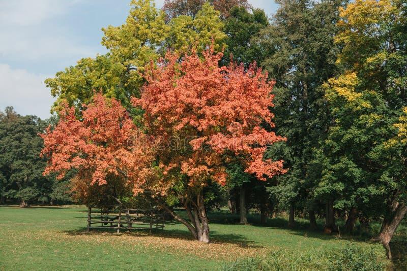与红色,黄色和绿色叶子的美丽的秋天树在公园在一个晴天 库存照片