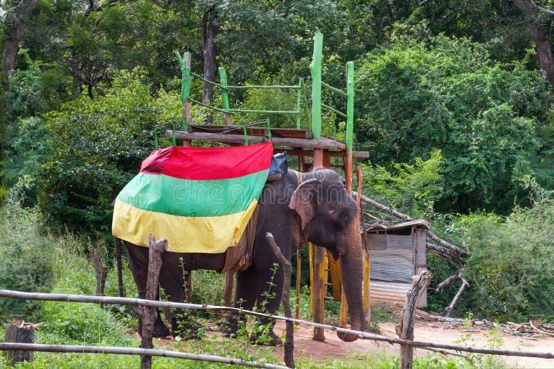 与红色绿色黄旗的大象 库存图片