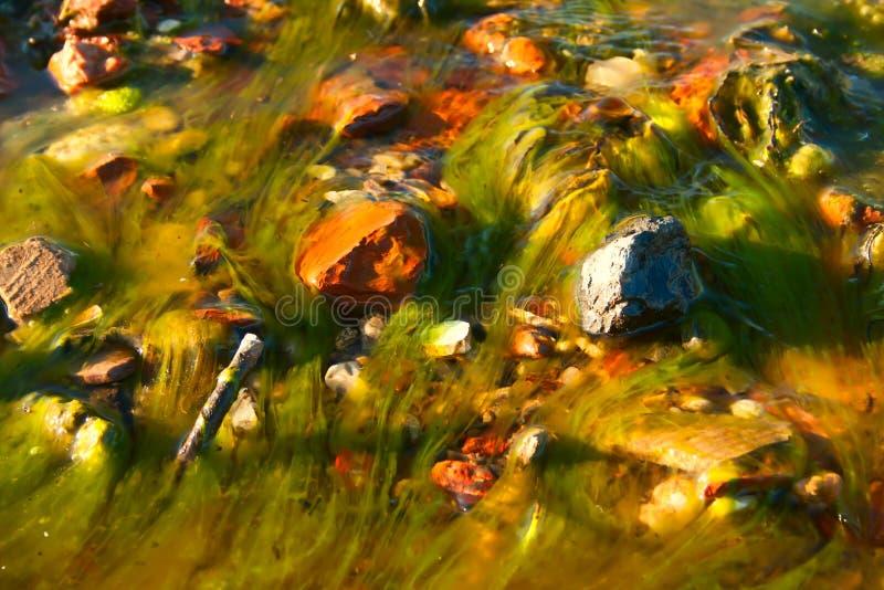 与纤维状海藻的风景背景 Spirogyra 免版税图库摄影