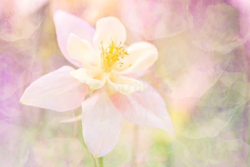与纹理的精美抽象花 在温暖的桃红色音调的一朵花 软的选择聚焦 时髦的背景 免版税库存照片
