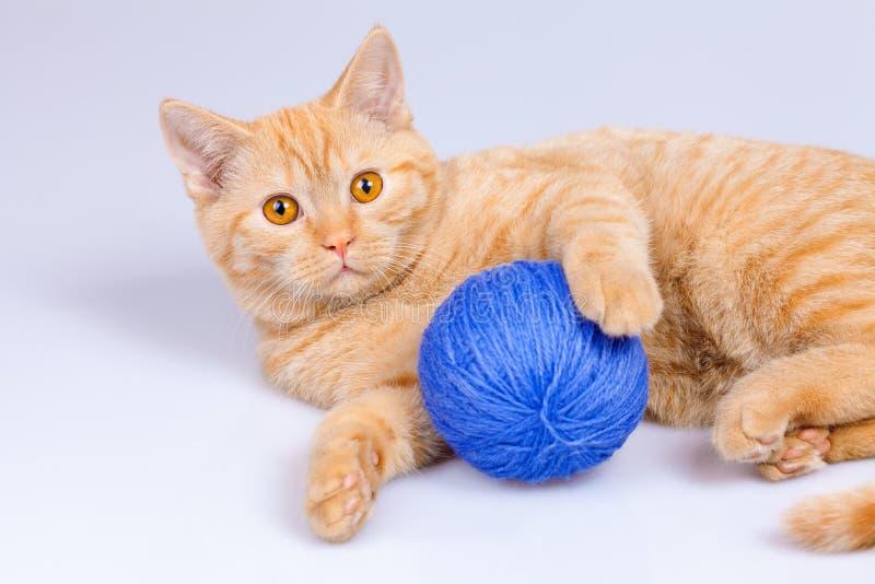 与线团的小猫 免版税库存图片