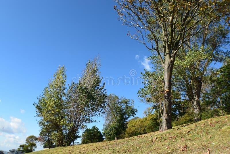 与结构树的小山 库存图片