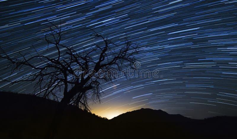 与结构树的星形线索 图库摄影