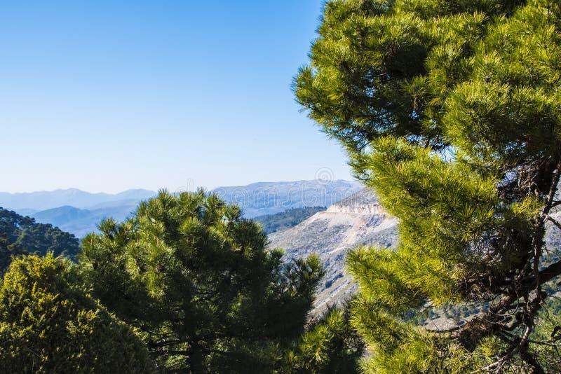 与绵延山橄榄树小树林和农场的安达卢西亚的山风景在蓝天下在南西班牙 免版税库存图片