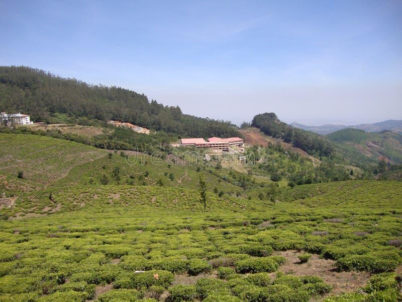 与绿叶和美丽的景色的美妙的小山 免版税库存照片