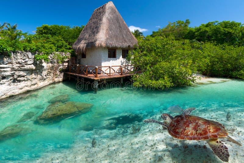 与绿海龟的墨西哥风景 库存照片