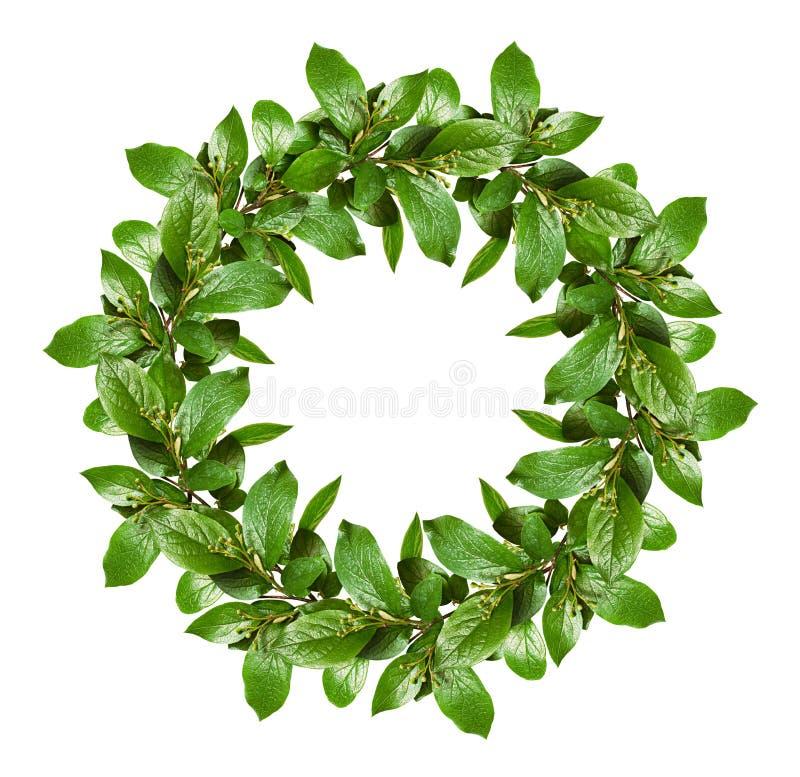 与绿色叶子和小花蕾的春天花圈 免版税库存照片