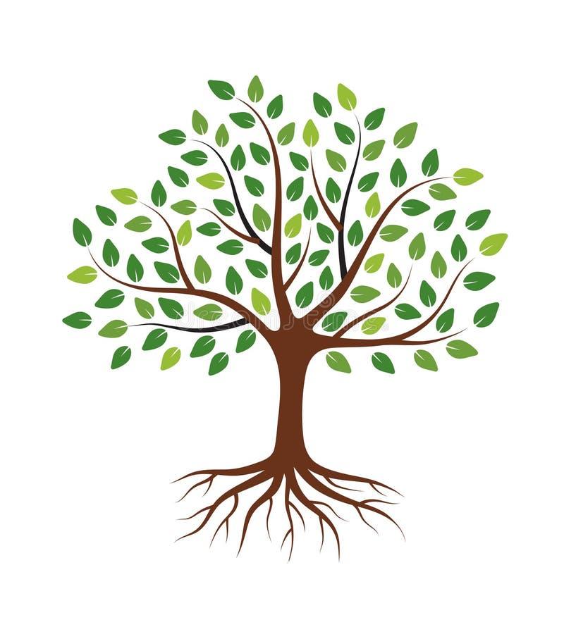 与绿色叶子和根的树 r 图库摄影