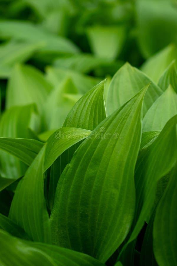 与绿色叶子和bokeh的背景 库存图片