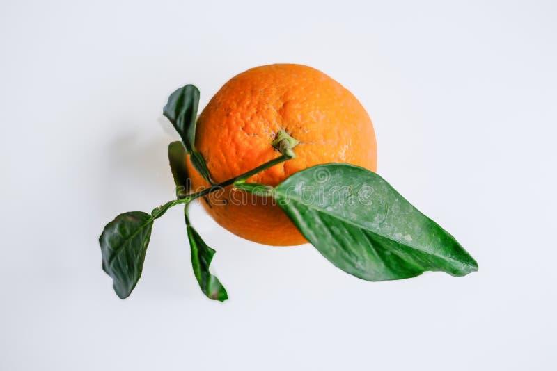 与绿色叶子的唯一桔子在简单的浅灰色的背景 免版税库存图片