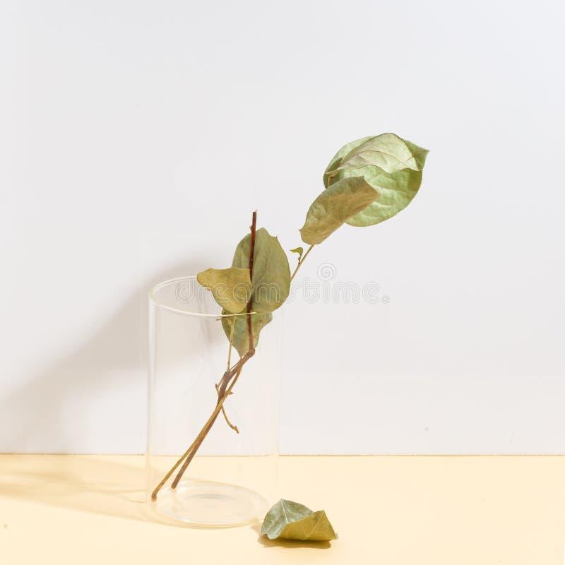 与绿色叶子的干燥分支在一个玻璃花瓶 库存图片