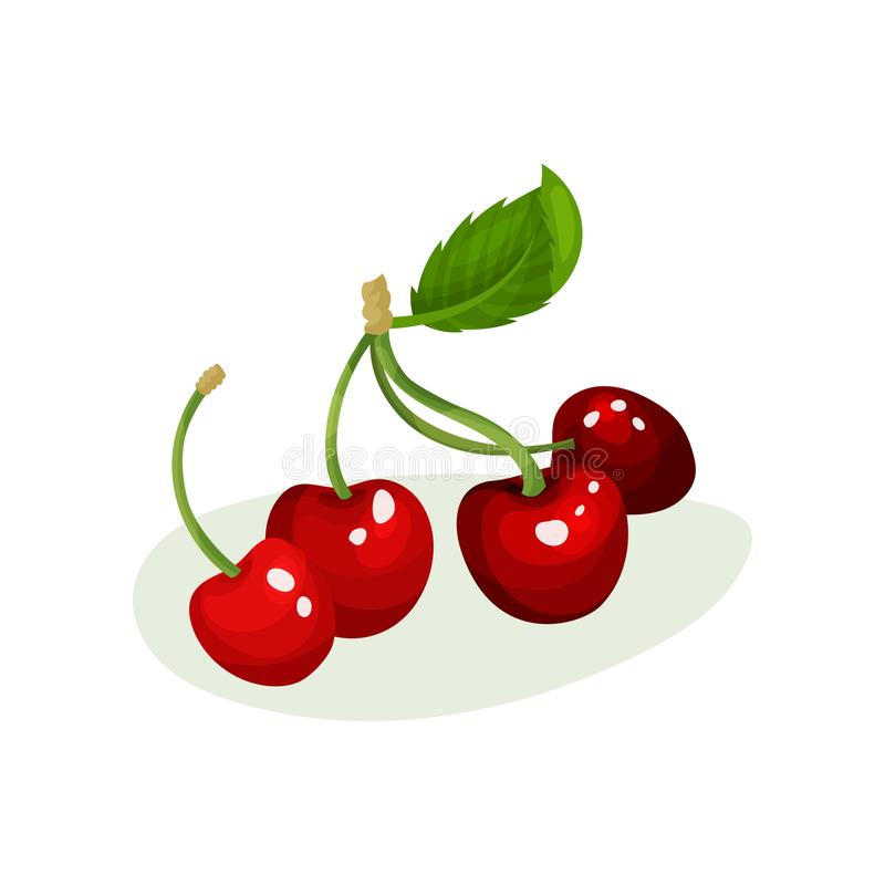 与绿色叶子的成熟樱桃 甜和鲜美莓果 自然和新鲜食品 汁液包装的平的传染媒介元素 皇族释放例证