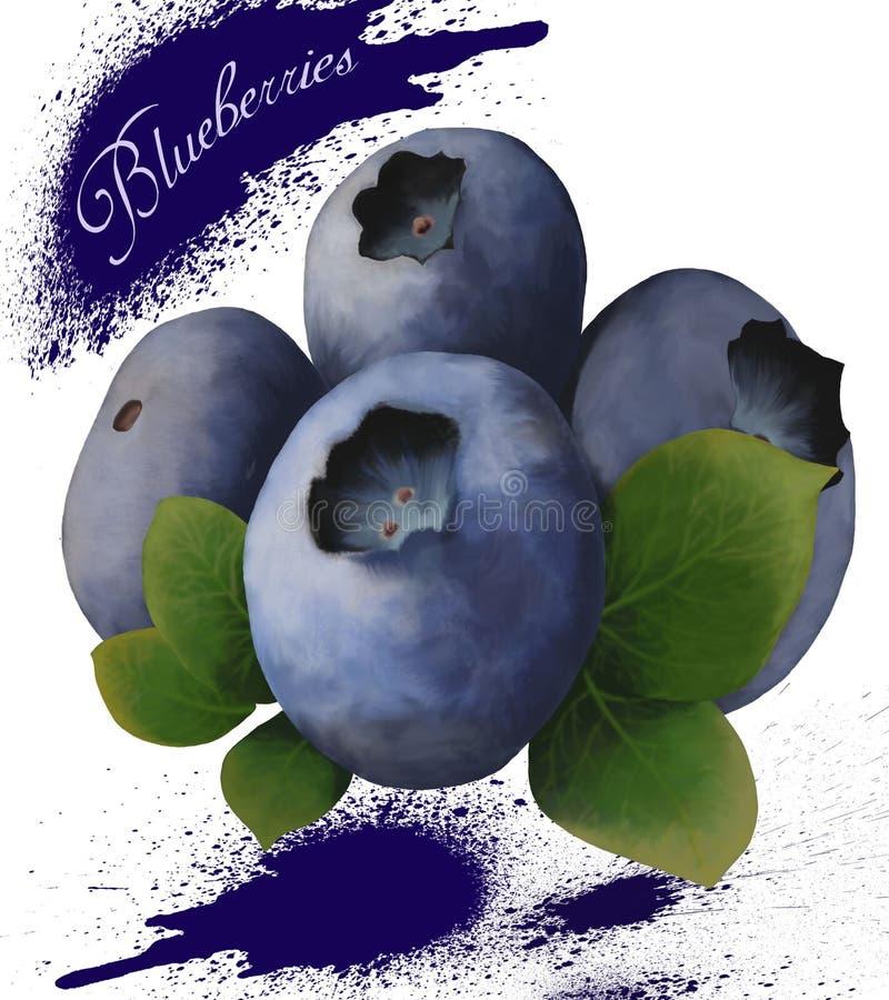 与绿色叶子的成熟蓝莓在白色背景 向量例证