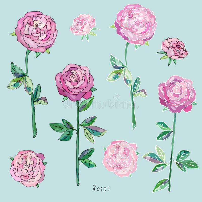 与绿色叶子的桃红色在灰色蓝色背景的玫瑰和词根 水彩的模仿 也corel凹道例证向量 向量例证