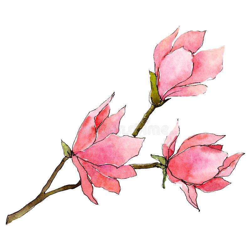 与绿色叶子的桃红色木兰花 被隔绝的花束例证元素 水彩背景例证集合 库存例证