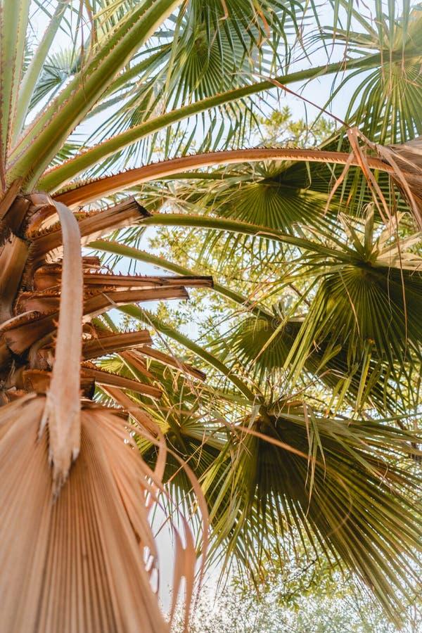 与绿色叶子的棕榈树在海滩图片
