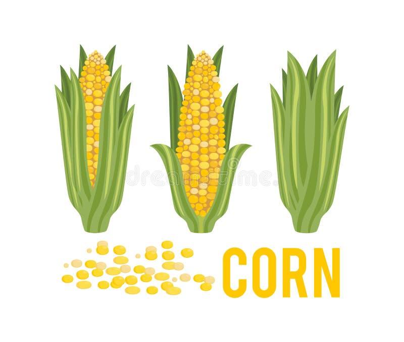 与绿色叶子的玉米 皇族释放例证