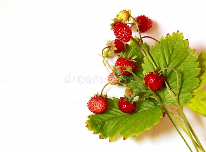 与绿色叶子的红色新鲜的莓果在白色背景 库存图片