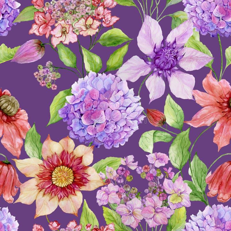 与绿色叶子的美丽的铁线莲属和八仙花属花反对紫色背景 无缝花卉的模式 向量例证