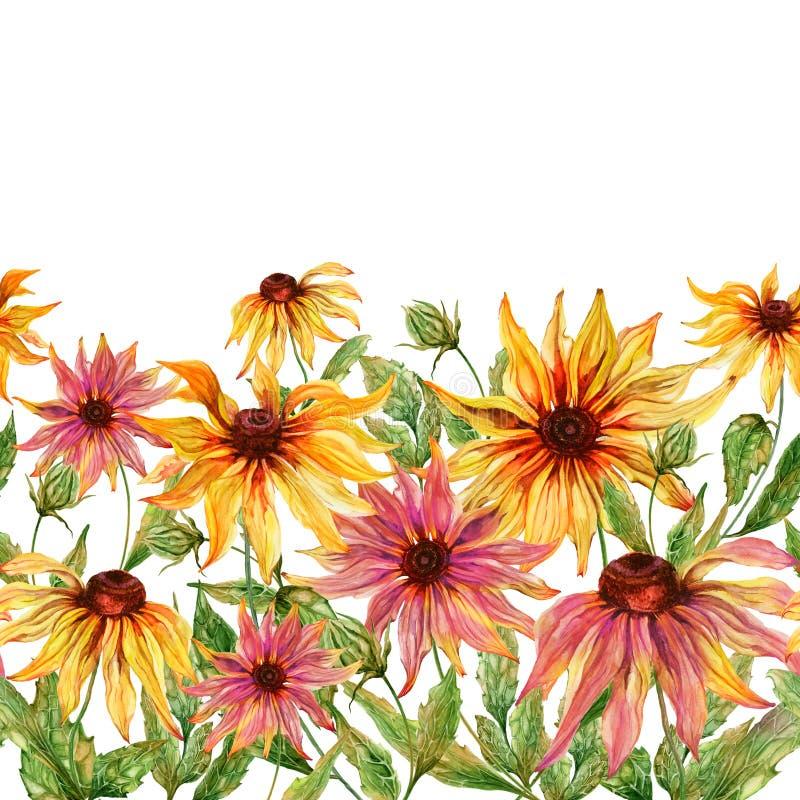 与绿色叶子的美好的海胆亚目花coneflower在白色背景 无缝花卉的模式 多孔黏土更正高绘画photoshop非常质量扫描水彩 库存例证