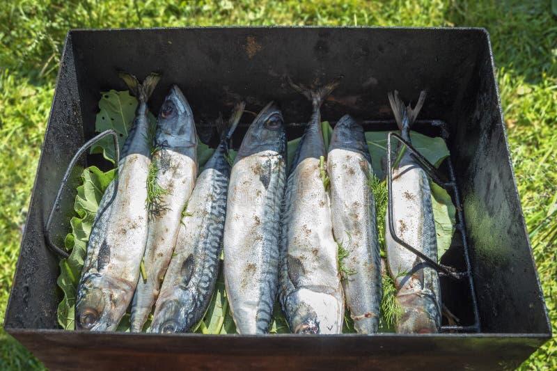与绿色和黑胡椒的新鲜的鲭鱼鱼 热的熏制的鱼的准备在户外格栅的 免版税库存照片
