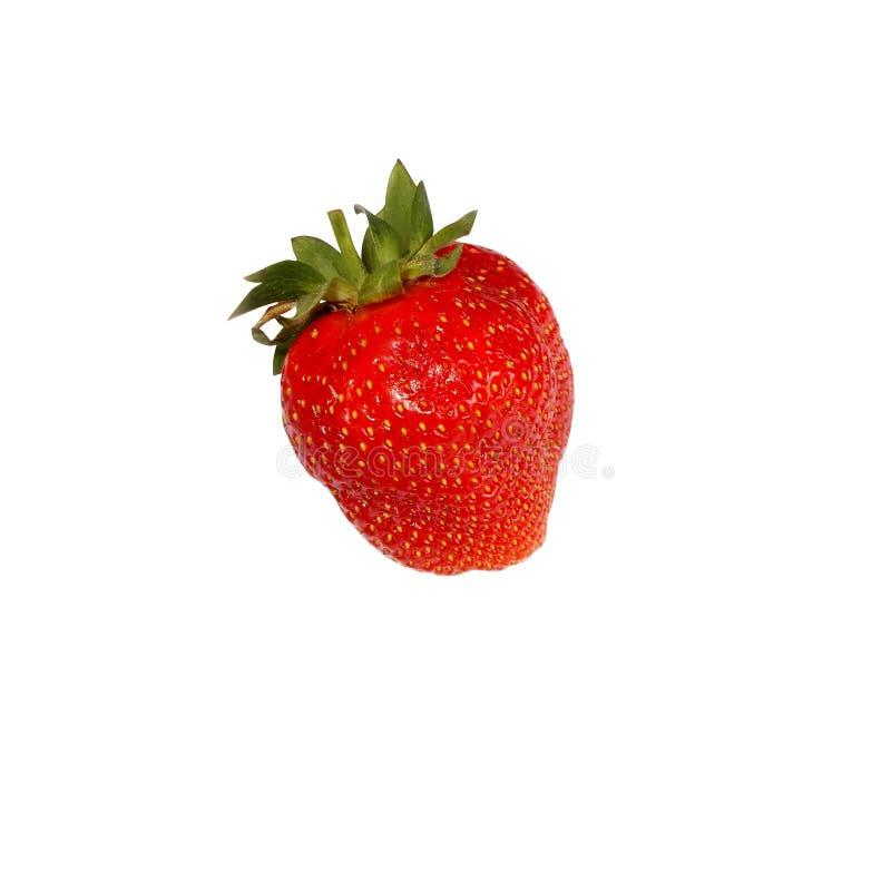 与绿色尾巴的红色草莓在白色背景 免版税库存照片