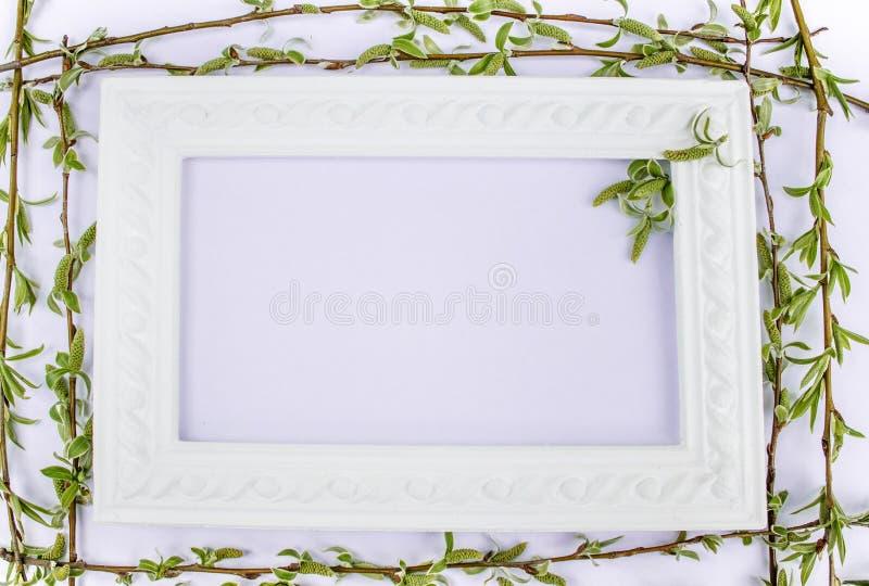 与绿色杨柳分支的白色框架在桃红色背景的 E 图库摄影