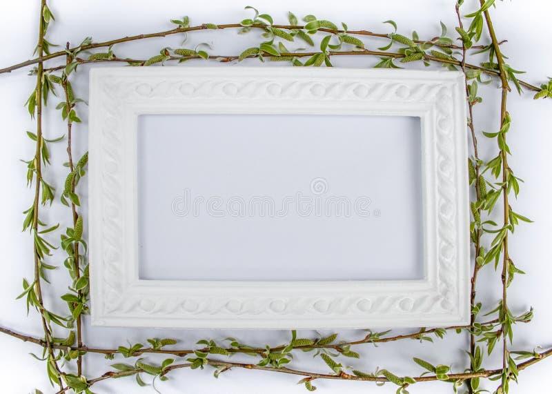 与绿色杨柳分支的白色框架在白色背景 拷贝空间在您的文本的中部 图库摄影