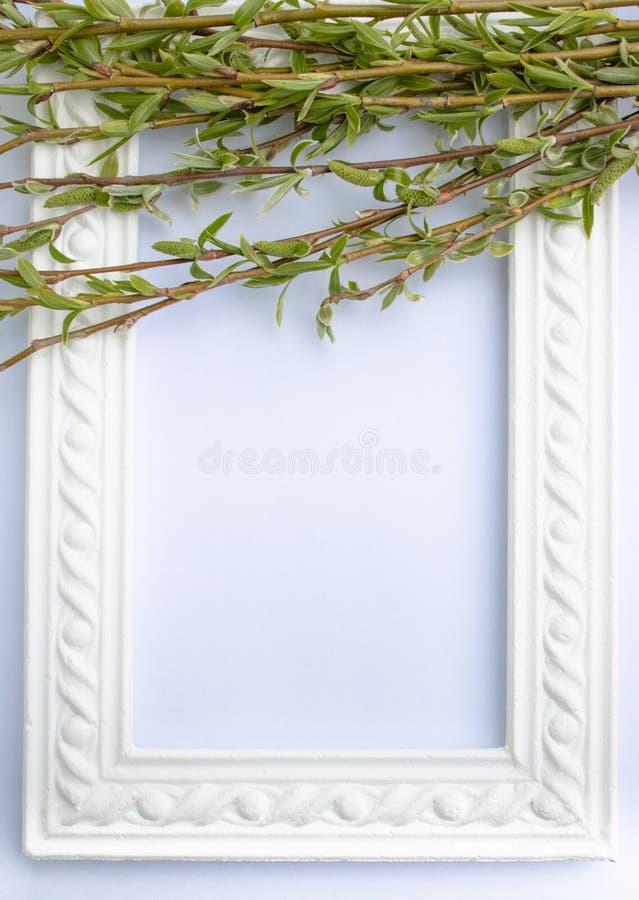 与绿色杨柳分支的白色框架在白色背景 E 免版税库存照片